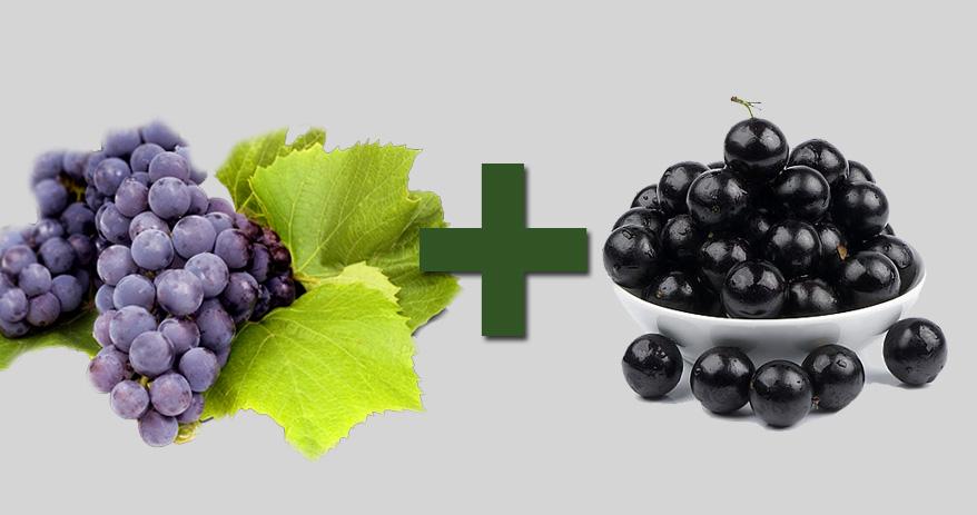 06 Combinações de alimentos que ajudam a melhorar sua saúde - frutas antioxidantes